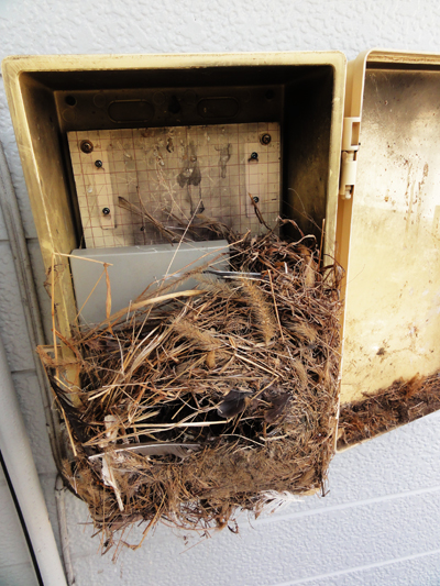 川口市で鳥の巣被害を受けたブースター