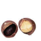 マカデミアナッツ殻つき